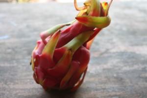 decouverte d un nouveau fruit dont jai oublie le nom...