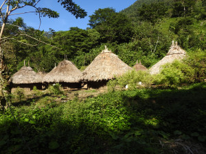 les petits arbustes devant les huttes ce sont des plants de coca que seuls les indigènes sont autorisés à cultiver