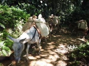 à défaut de corbeaux, ravitaillement par les mules