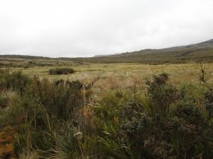 parc national Purucé