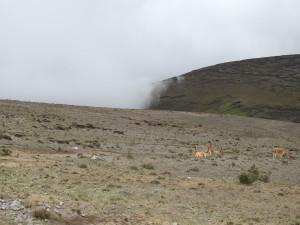 13 fév 2019 Chimborazo 4 B