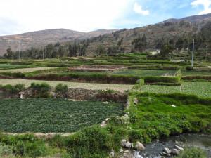 2019 11 27 5B plantes Palcamayo vers Tarma (Large)